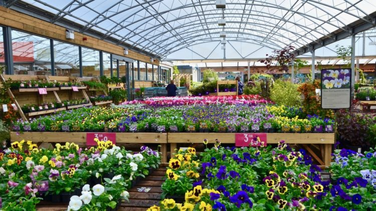 Gardening Centres Could Open Within Days As Industry Faces 1 6bn Loss